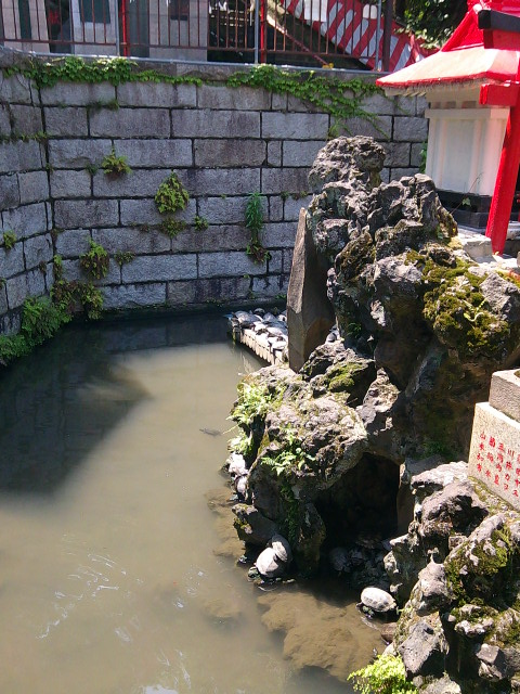 成田山横浜別院の池の亀さん
